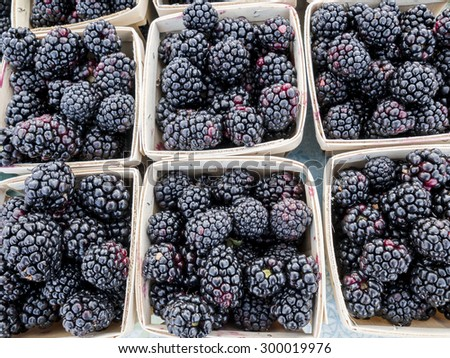 Boxes of just picked blackberries at local farm market. - stock photo