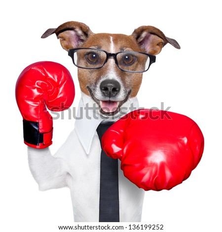 Boxing business dog punching towards camera with red boxing gloves - stock photo