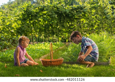 Boy and girl in the garden, harvest in a large basket: carrots, beets, parsley. Sunset