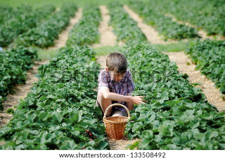 boy at the strawberry plantation picking berries - stock photo