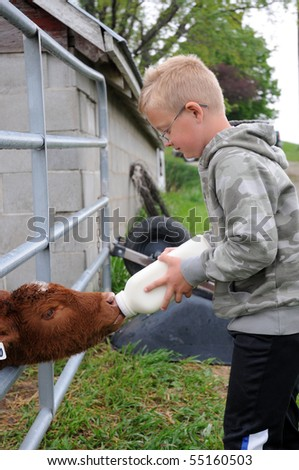 Boy Bottle Feeds Calf on Farm - stock photo