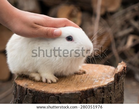 Boy caresses a cute little white rabbit on piece of of wood.