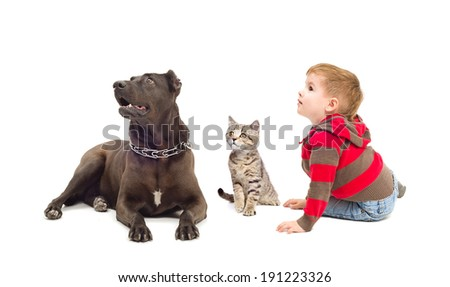 Boy, dog and kitten sitting together looking up - stock photo