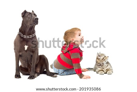 Boy, dog and kitten together looking away - stock photo