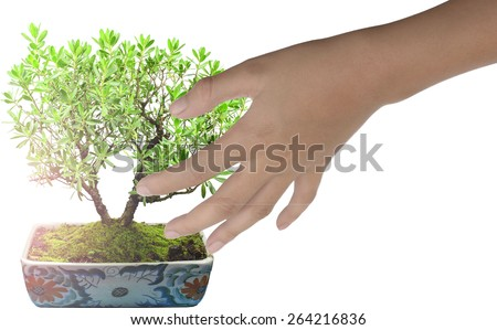 boy hand holding Bonsai tree  isolated on white background.