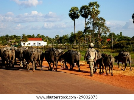 Boy herding buffaloes on the road back from the killing fields, to Phnom Penh, Cambodia.