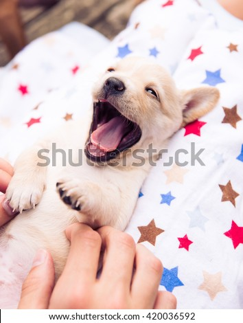 Boy Holding Small Tan Puppy on Blanket Outside - stock photo