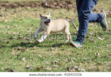 Boy jogging with cute happy fluffy puppy at park - stock photo