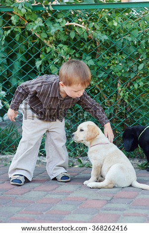 boy plays with a dog breed Labrador. - stock photo