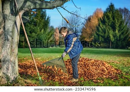 boy racking fallen autumn leaves in garden - stock photo