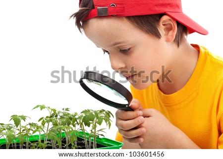 Boy studies young plants looking through magnifier - closeup - stock photo