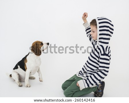 Boy training obedience to beagle dog