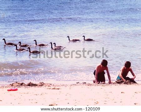 Boys and Geese on beach - stock photo