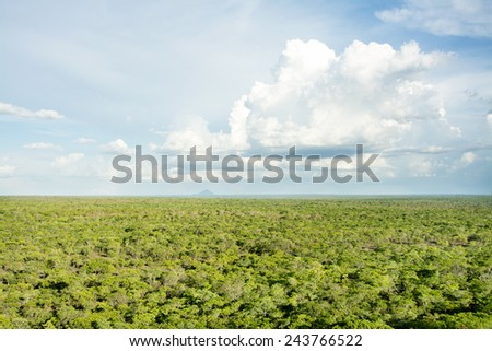 Brachystegia Woodlands from Top of Black Rock, Kasungu National Park, Malawi, Africa - stock photo