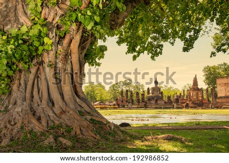 Braided roots of large banyan tree in Sukhothai Historical Park, Thailand  - stock photo