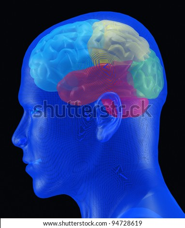 Brain. A human brain of different colour under a transparent mesh cover - stock photo
