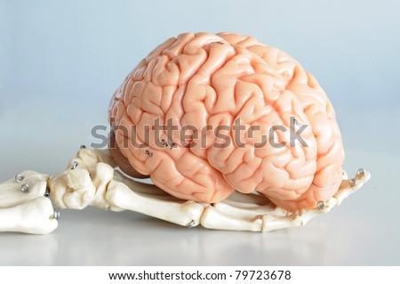 brain and brain - stock photo