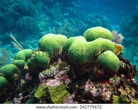 Brain Coral and Other Reef Structures, Corn Islands, Nicaragua - stock photo
