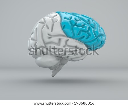 Brain division organ structure. frontal lobe  - stock photo