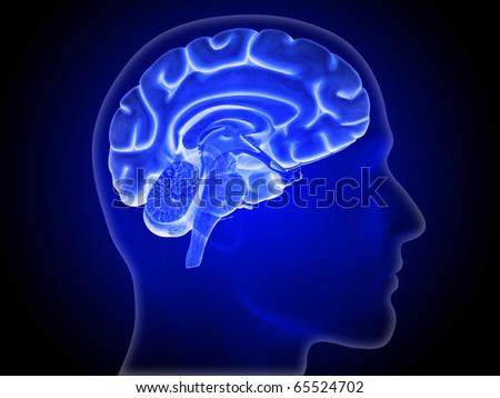 Brain, Hemisphere, Head Silhouette - stock photo