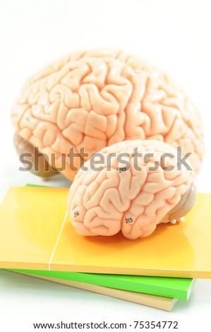 brain on the book - stock photo