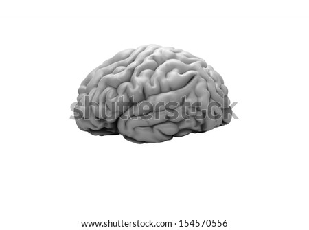 Brain on the white background
