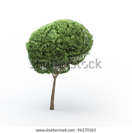 Brain shaped tree - stock photo
