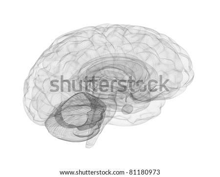 Brain wire frame model - stock photo