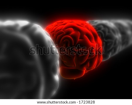 brains - stock photo