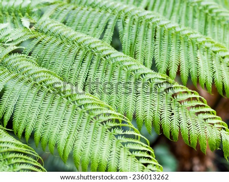 braken fern - stock photo