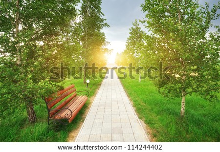 Branch and way to sun. Conceptual design. - stock photo