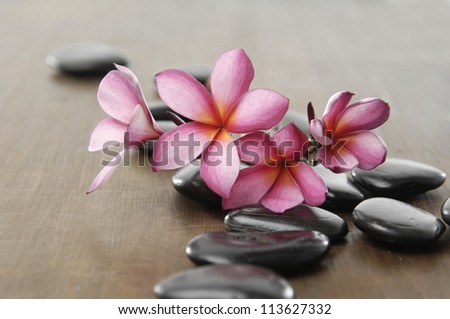 branch frangipani with zen stones on wooden board - stock photo