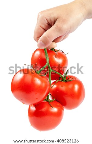 Branch fresh tomatoes in hand isolated on white background. - stock photo
