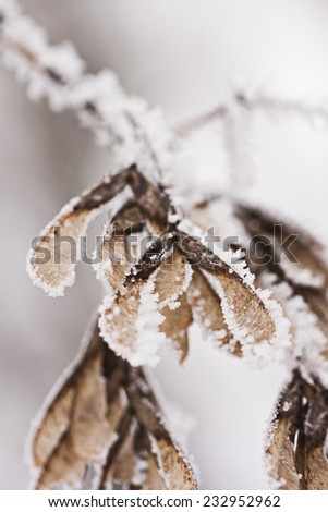 Branch full of hoarfrost with natural background  - stock photo