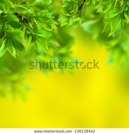 Branch in green leaves on a yellow background
