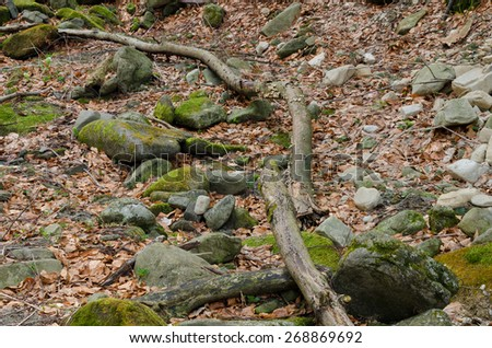 Branch in leafs - stock photo
