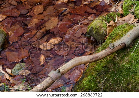 Branch in the moss - stock photo