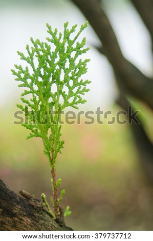 branch of a fern against green vegetation - stock photo