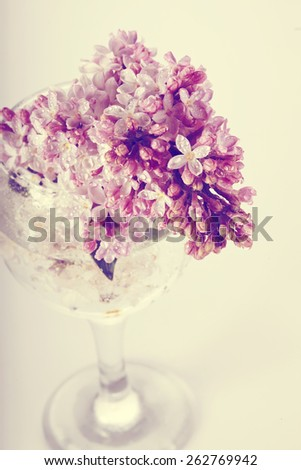 Branch of a lilac lilac in a glass. Syringa vulgaris. - stock photo