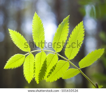Branch of a tree against spring wood - stock photo