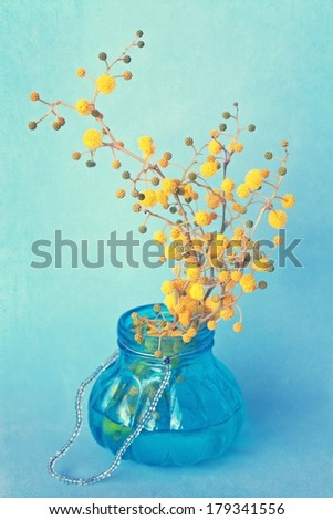 branch of a yellow mimosa  flowers in a blue glass vase . vintage style. - stock photo