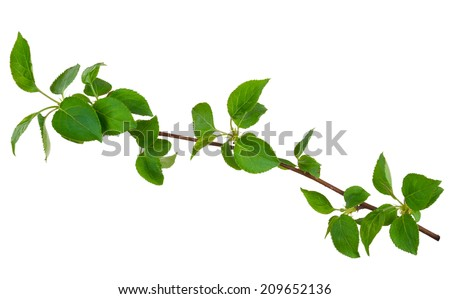 Branch of apple - stock photo