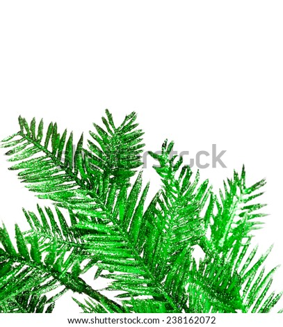 branch of Christmas tree on white - stock photo