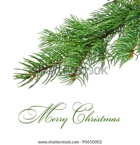 Branch of Christmas tree on white background - stock photo