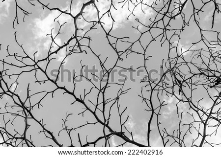 Branch of dead tree on cloud and sky background  in black-white tone