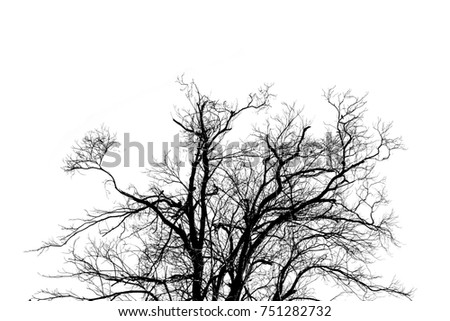 Branch of Dead tree  Silhouette Isolated on White Background