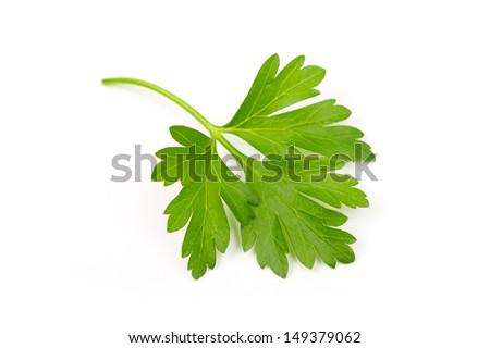 Branch of fresh parsley  - stock photo