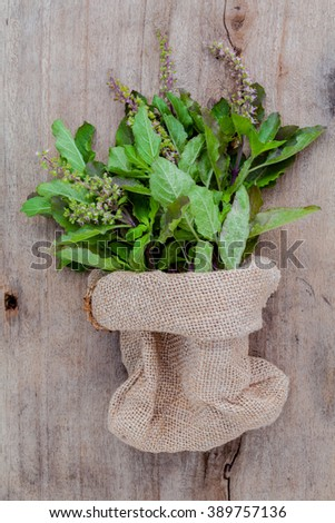 Branch of fresh red holy basil and holy basil flower from the garden in hemp sack bag on wooden background. - stock photo