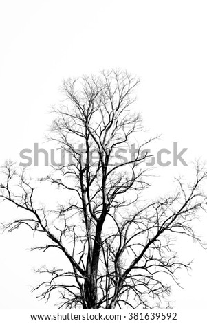 Branch of leafless tree silhouette on white background - stock photo