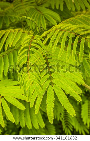 Branch of leaves. Pagoda tree - stock photo